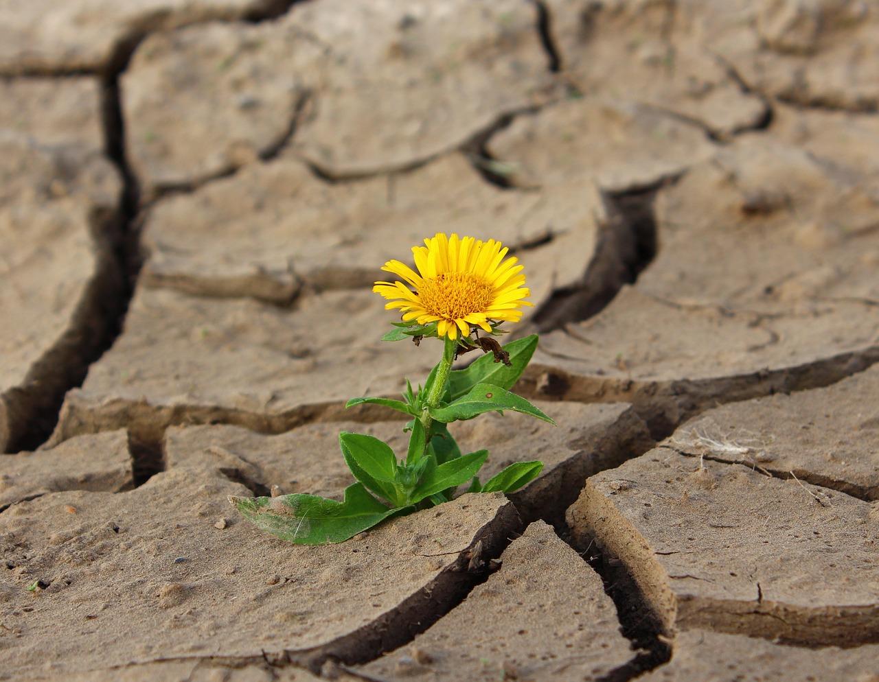 """""""Nasce, cresce deserti"""". Racconti per il cuore"""